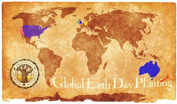 Archangel Global Earth Day Planting