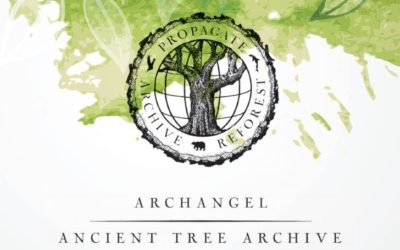 Archangel Press Kit Released