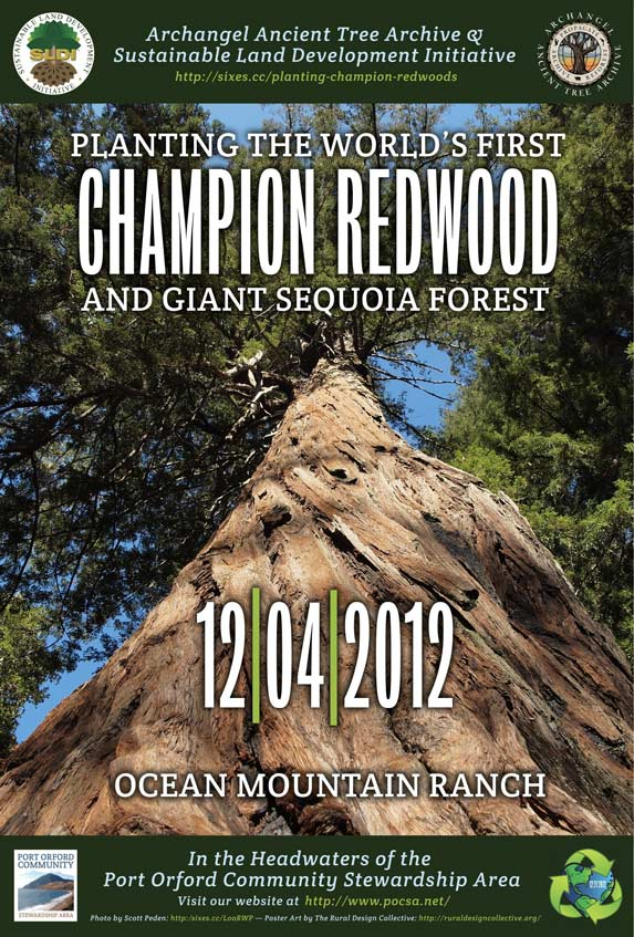 Port Orford Champion Redwood Planting