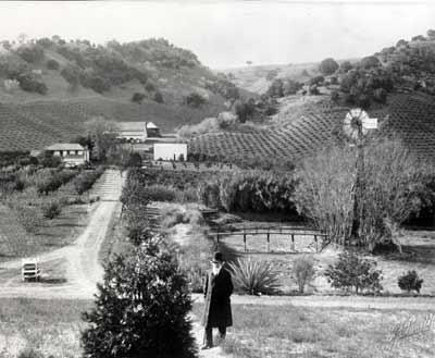 John Muir's Newly Planted Giant Sequoia, circa 1898