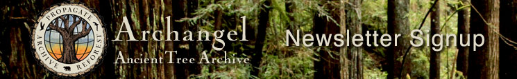 Archangel Newsletter Signup