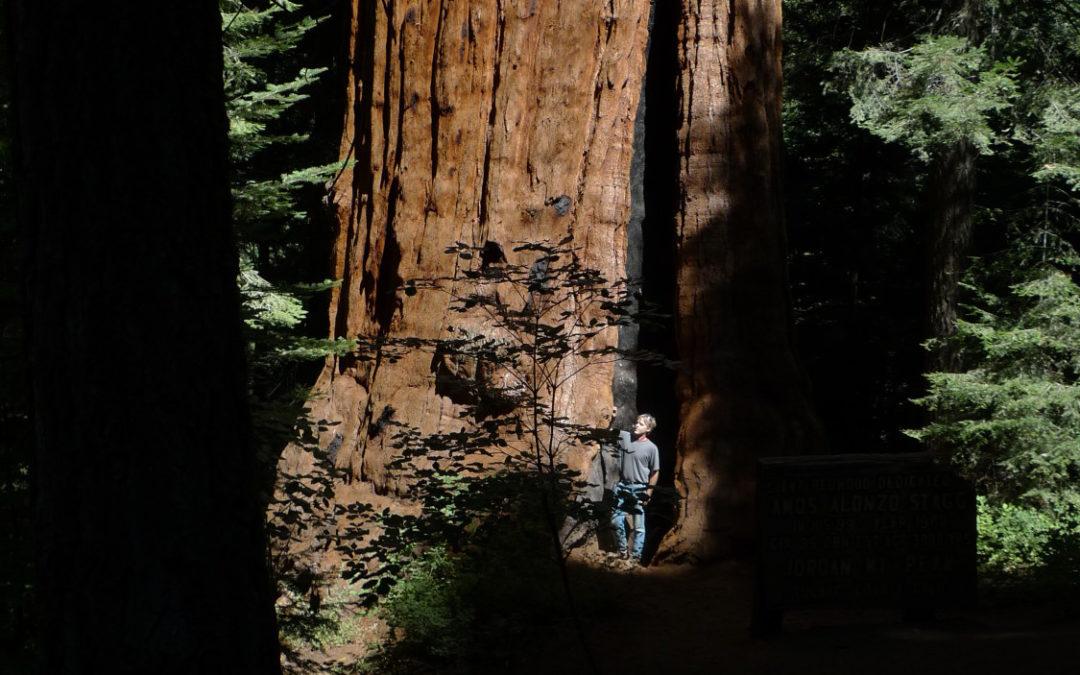 Sonny's Redwoods