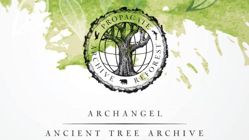 Archangel Press Kit Released