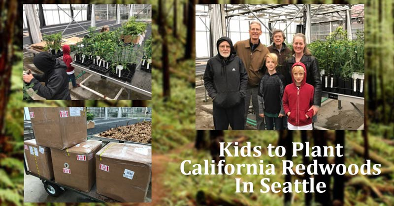 Kids to plant California redwood saplings in Seattle