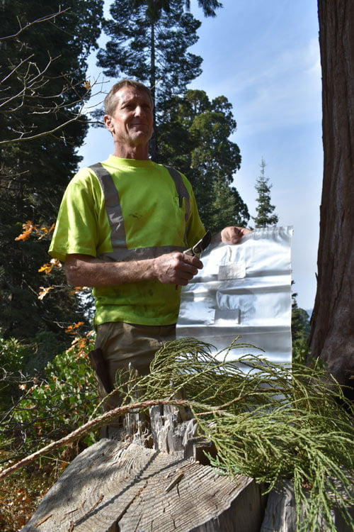 Coast Redwood Cloning Expedition