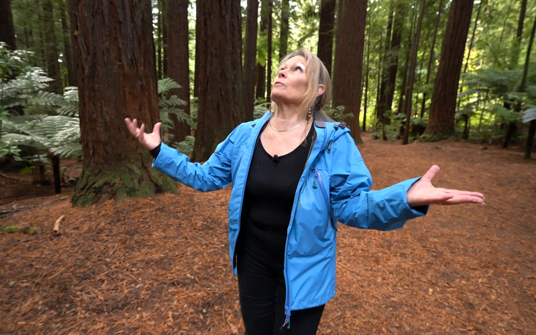 Dr. Jenny Aitken, Archangel Science Advisor, Tours a New Zealand Redwood Grove